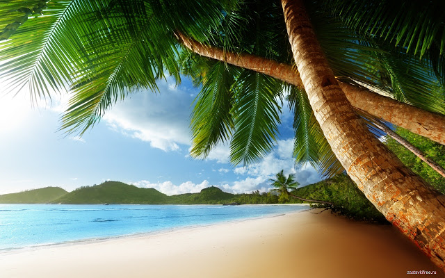 beach-inspired-theme