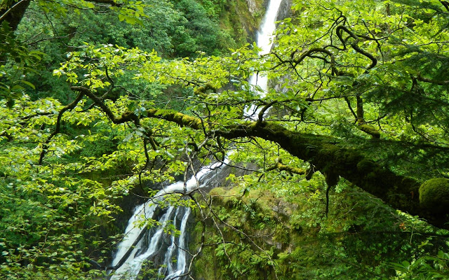 forest-waterfall