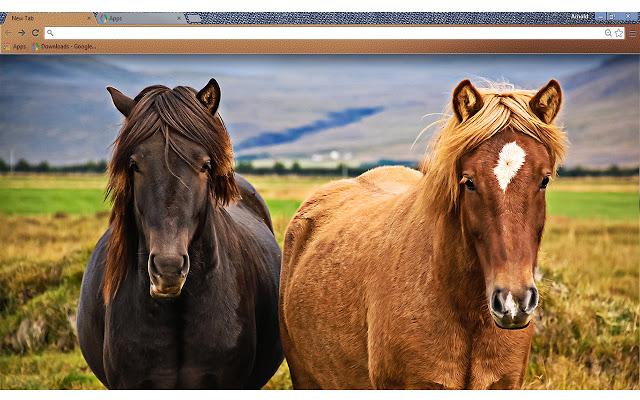 love-horses
