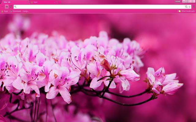 pink-blossom