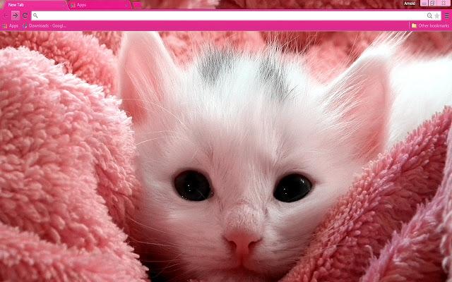 pink-kitten