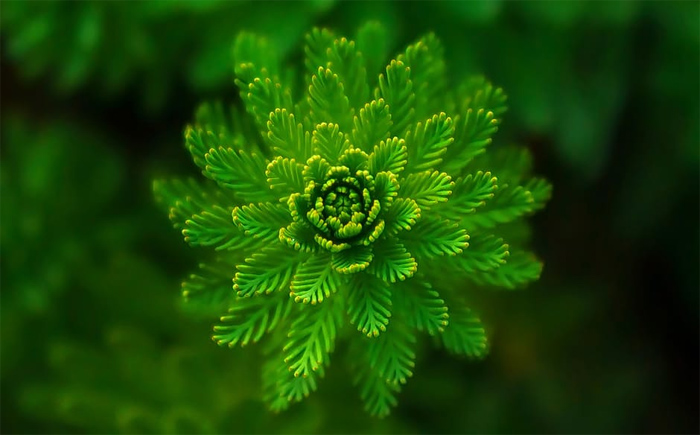 abstract-green-plant