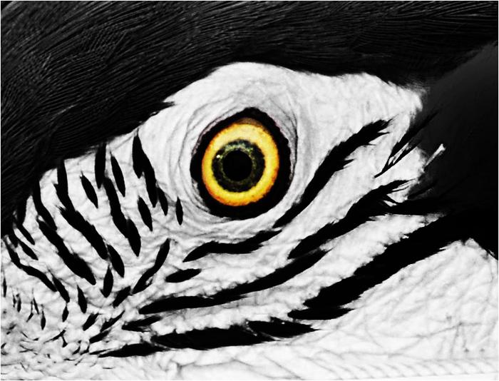 eye-abstract